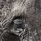 The Elephant's Eye - iPhone case by Britta Döll