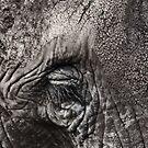 The Elephant's Eye - iPhone case by Britta Döll