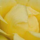 Lemon Sorbet by garts