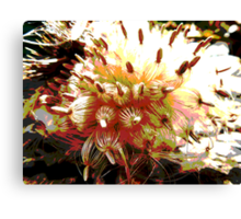 Scotch thistle. Canvas Print