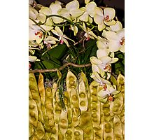 gardenia arrangement 1 Photographic Print
