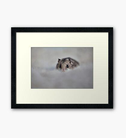 Snug Framed Print