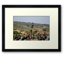 Stand Out From The Rest Framed Print