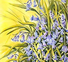 Bluebells by FranEvans