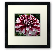 Two Tone Beauty Framed Print