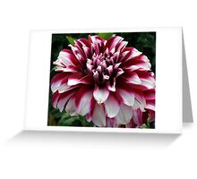 Two Tone Beauty Greeting Card