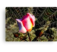 Rose and Web Canvas Print