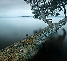 Floating Limb (point of view) by Michael Howard