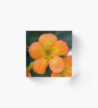 orange beauty Acrylic Block