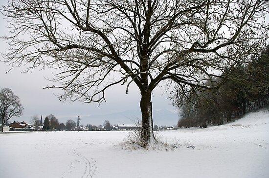 winter scene 3 by Daidalos
