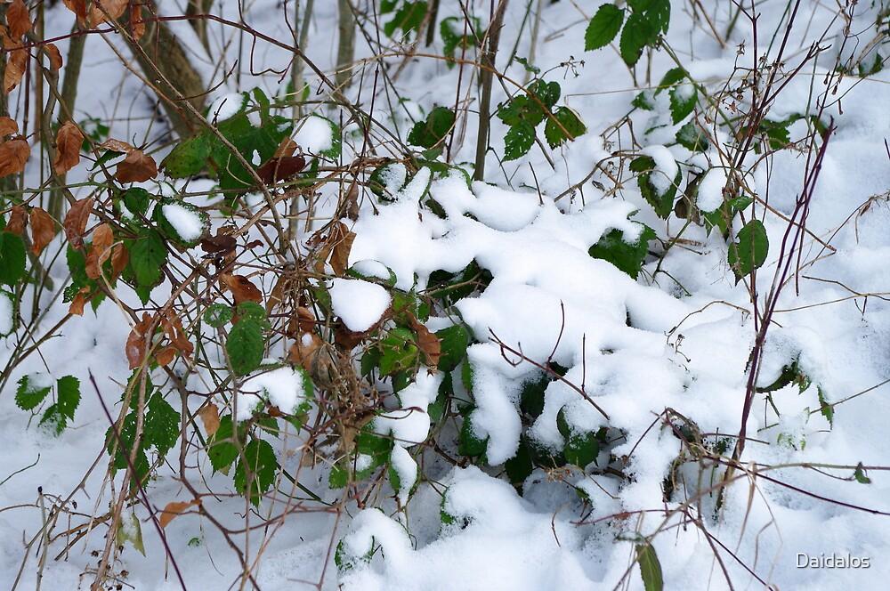 winter scene 5 by Daidalos