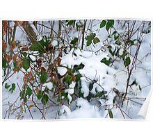 winter scene 5 Poster
