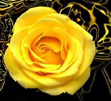 Abstract Rose Macro by Glenn Cecero