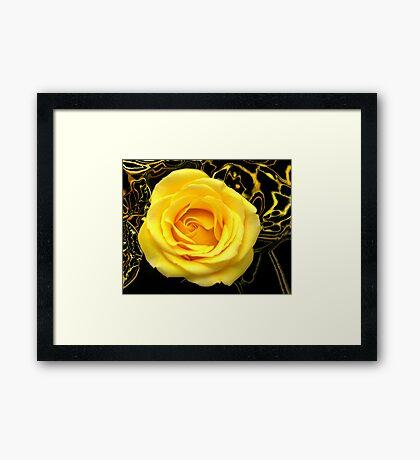Abstract Rose Macro Framed Print