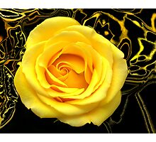 Abstract Rose Macro Photographic Print