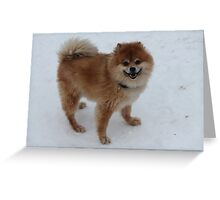 Chico in the snow Greeting Card