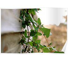 Crawling Vine Poster