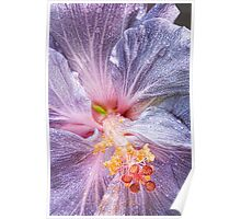 Grey Hibiscus Poster