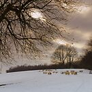 Sheeps 2 by JEZ22