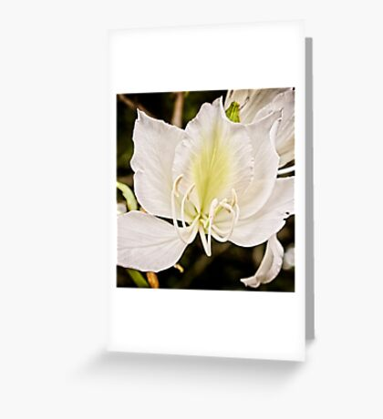 Beautiful butterfly tree Greeting Card