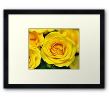 Outstanding Rose - Textured Framed Print