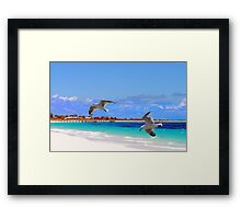 Just flown in from the windy city... Framed Print