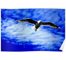 Seagull on the wing Poster