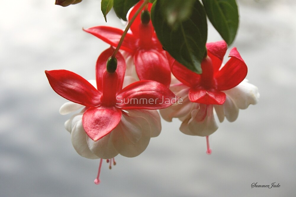 Fuchsia ~ Hanging Over the Lake by SummerJade
