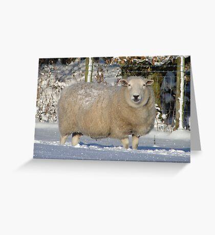 Ewe Looking at Me? Greeting Card