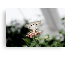 Tan Butterfly Canvas Print