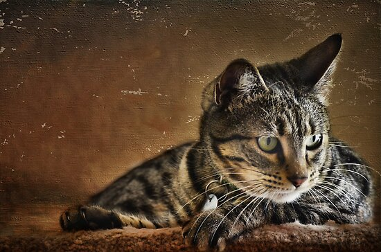 It's a Cat's Life by Barbara Manis