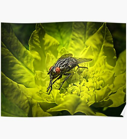 Macro Shot of a Summer Fly Sunbathing on a Yellow Perennial Garden Plant ~ Insect Photography Poster