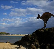 Sawtell Skippy by myraj