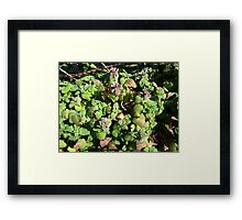 Beauty In Weeds 2 Framed Print