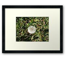 Beauty In Weeds 6 Framed Print