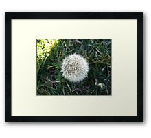 Beauty In Weeds 7 Framed Print