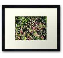 Beauty In Weeds 8 Framed Print