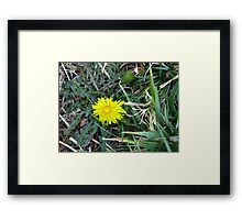 Beauty In Weeds 9 Framed Print