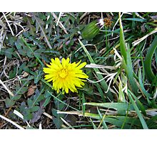 Beauty In Weeds 9 Photographic Print