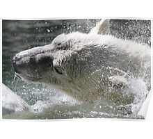 Polar Bear & Shutter Speed Poster