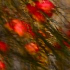 Apple tree Abstract. by Brown Sugar.  Views: 738.  Thx! dear friends ! by AndGoszcz