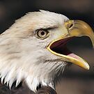 Screaming Eagle 2 by Gregg Williams