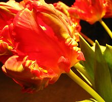 Vibrant Tulips 3 by MonicaDay