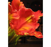 Vibrant Tulips 4 Photographic Print