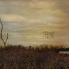 Fly Away Home by Robin-Lee