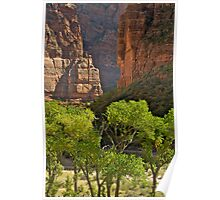 Cottonwood Trees, Zion National Park Poster