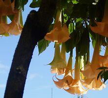 belladonna in my garden by MardiGCalero