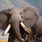 Big Ear Elephant by Guatemwc