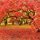 A Carpet of Color by Images Abound | Neil Protheroe