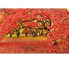 A Carpet of Color Photographic Print